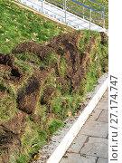 Купить «The rolled lawn folded in stacks on street», фото № 27174747, снято 2 ноября 2017 г. (c) Володина Ольга / Фотобанк Лори