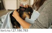 Купить «Mistress Stroking Small Dog», видеоролик № 27186783, снято 7 ноября 2017 г. (c) Илья Шаматура / Фотобанк Лори