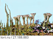 Купить «Fairy forest of mushrooms and lichens», фото № 27188883, снято 6 ноября 2017 г. (c) Юрий Шурчков / Фотобанк Лори