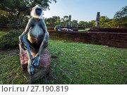 Купить «Tufted gray langur male sitting on ancient ruins  (Semnopithecus priam thersites). Polonnaruwa, Sri Lanka February.», фото № 27190819, снято 23 января 2019 г. (c) Nature Picture Library / Фотобанк Лори