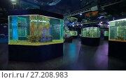 Купить «Fishes in aquarium at oceanarium», видеоролик № 27208983, снято 5 октября 2016 г. (c) Илья Шаматура / Фотобанк Лори