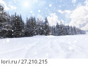 Купить «Spruce forest in winter. Winter landscape», фото № 27210215, снято 5 января 2015 г. (c) Евгений Ткачёв / Фотобанк Лори