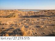 Oasis in the Kyzylkum desert near Khiva. Стоковое фото, фотограф Юлия Бабкина / Фотобанк Лори