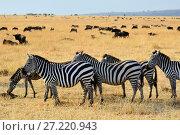 Купить «African wildlife, Kenya», фото № 27220943, снято 21 августа 2010 г. (c) Знаменский Олег / Фотобанк Лори