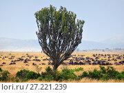Купить «Masai Mara before sunrise, Kenya, Africa», фото № 27221239, снято 21 августа 2010 г. (c) Знаменский Олег / Фотобанк Лори