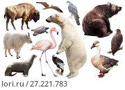 Купить «Set of fauna of North American animals.», фото № 27221783, снято 24 марта 2019 г. (c) Яков Филимонов / Фотобанк Лори