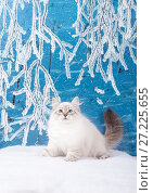 Купить «Siberian kitten in snowy forest for christmas card», фото № 27225655, снято 27 октября 2016 г. (c) ElenArt / Фотобанк Лори