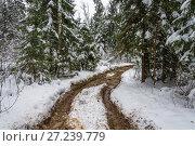 Купить «Forest road on a winter day», фото № 27239779, снято 25 ноября 2017 г. (c) Валерий Смирнов / Фотобанк Лори
