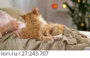 Купить «woman stroking red tabby cat in bed at home», видеоролик № 27243707, снято 24 ноября 2017 г. (c) Syda Productions / Фотобанк Лори