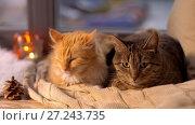 Купить «two cats lying on blanket at home window sill», видеоролик № 27243735, снято 24 ноября 2017 г. (c) Syda Productions / Фотобанк Лори