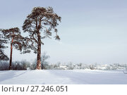 Купить «Winter landscape. Frosty high pine trees in winter forest and houses on the background in cold winter day», фото № 27246051, снято 1 декабря 2017 г. (c) Зезелина Марина / Фотобанк Лори