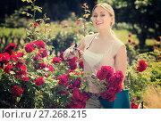 Купить «young female gardener caring roses», фото № 27268215, снято 22 октября 2019 г. (c) Яков Филимонов / Фотобанк Лори