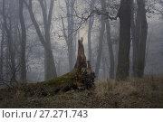 Купить «Fallen oak», фото № 27271743, снято 17 ноября 2017 г. (c) александр жарников / Фотобанк Лори