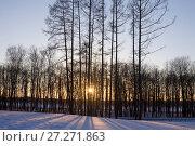 Купить «Зимний закат с солнцем, просвечивающим сквозь деревья», эксклюзивное фото № 27271863, снято 10 марта 2013 г. (c) Солодовникова Елена / Фотобанк Лори