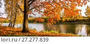 Купить «Дыхание осени Autumn oak with yellow-red leaves», фото № 27277839, снято 7 октября 2011 г. (c) Baturina Yuliya / Фотобанк Лори