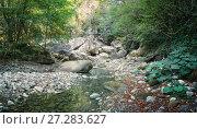 Купить «Горная река в лесу», фото № 27283627, снято 27 сентября 2017 г. (c) виктор химич / Фотобанк Лори