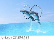Купить «Пара афалин или больших дельфинов, или бутылконосых дельфинов (лат. Tursiops truncatus) синхронно прыгают через обручи», фото № 27294191, снято 11 июня 2017 г. (c) Наталья Гармашева / Фотобанк Лори