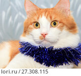 Funny red and white cat with christmas tinsel decoration. Стоковое фото, фотограф Курганов Александр / Фотобанк Лори