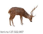 Купить «Пятнистый олень на белом фоне изолировано», фото № 27322007, снято 28 ноября 2015 г. (c) Наталья Волкова / Фотобанк Лори