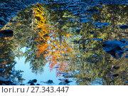 Купить «Autumn trees reflection in puddle.», фото № 27343447, снято 16 октября 2017 г. (c) Юрий Брыкайло / Фотобанк Лори