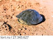 Scared tortoise hid in a shell. Стоковое фото, фотограф Евгений Ткачёв / Фотобанк Лори
