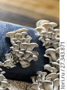 Купить «Выращивание грибов вешенка на грибной ферме», фото № 27343871, снято 15 апреля 2017 г. (c) Евгений Ткачёв / Фотобанк Лори