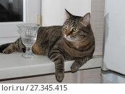Купить «Кот на подоконнике», фото № 27345415, снято 14 декабря 2017 г. (c) Валерий Денисов / Фотобанк Лори