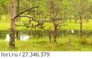 Купить «Swamp Viru Raba in Estonia», видеоролик № 27346379, снято 21 октября 2016 г. (c) BestPhotoStudio / Фотобанк Лори