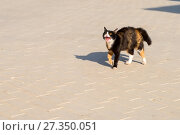Купить «Монастырский кот ругается», фото № 27350051, снято 13 августа 2017 г. (c) Pukhov K / Фотобанк Лори