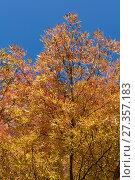 Купить «Autumn leaves and trees in Versailles park», фото № 27357183, снято 14 октября 2017 г. (c) Сурикова Ирина / Фотобанк Лори