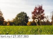 Купить «Autumn leaves and trees in Versailles park», фото № 27357383, снято 17 октября 2017 г. (c) Сурикова Ирина / Фотобанк Лори
