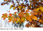 Купить «Autumn leaves and trees in Versailles park», фото № 27357759, снято 17 октября 2017 г. (c) Сурикова Ирина / Фотобанк Лори