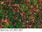 Купить «Autumn leaves and trees in Versailles park», фото № 27357767, снято 17 октября 2017 г. (c) Сурикова Ирина / Фотобанк Лори