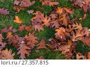 Купить «Autumn leaves and trees in Versailles park», фото № 27357815, снято 17 октября 2017 г. (c) Сурикова Ирина / Фотобанк Лори