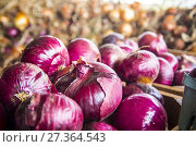 Купить «Onions in bulk, red and yellow, laying in an onion farm, in Virginia, Usa», фото № 27364543, снято 26 августа 2017 г. (c) age Fotostock / Фотобанк Лори