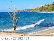 Купить «Wither tree on sea beach, Calabria, Italy», фото № 27382451, снято 18 июня 2017 г. (c) Юрий Брыкайло / Фотобанк Лори