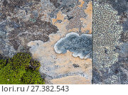 Купить «Crustose lichens (Lecanorales) on rocks in Swedish Padjelanta National Park, Laponia World Heritage Site, Sweden. August.  Highly commended in the GDT  European Wildlife Photographer of the Year  competition 2017», фото № 27382543, снято 20 января 2018 г. (c) Nature Picture Library / Фотобанк Лори