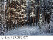Купить «В хвойном лесу. Зимний пейзаж», фото № 27383071, снято 8 января 2018 г. (c) Наталья Осипова / Фотобанк Лори