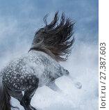 Купить «Серый в яблоках конь с длинной гривой в снежной буре», фото № 27387603, снято 25 декабря 2017 г. (c) Абрамова Ксения / Фотобанк Лори