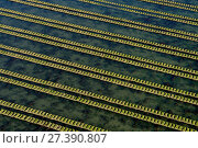 Купить «Rows of racks used in oyster farming at high tide, Isle de Re, Charente-Maritime, France, July 2017.», фото № 27390807, снято 21 января 2018 г. (c) Nature Picture Library / Фотобанк Лори