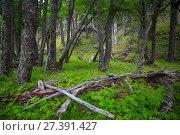 Forest near foot of Andes mountains (2017 год). Стоковое фото, фотограф Яков Филимонов / Фотобанк Лори
