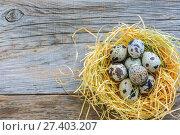 Купить «Colorful little quail eggs in the nest», фото № 27403207, снято 5 января 2017 г. (c) Марина Сапрунова / Фотобанк Лори