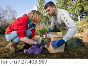 Becky Priestley, Wildlife Officer with Trees for Life, carrying out health checks on Red squirrels (Sciurus vulgaris) trapped as part of reintroduction... Стоковое фото, фотограф SCOTLAND: The Big Picture / Nature Picture Library / Фотобанк Лори