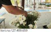 Купить «The florist prepares a bouquet of white flowers for a festive celebration», видеоролик № 27409659, снято 5 октября 2017 г. (c) Mikhail Davidovich / Фотобанк Лори