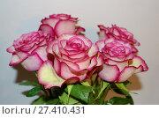 Купить «Rose flower is a symbol of beauty», фото № 27410431, снято 18 марта 2017 г. (c) Александр Клопков / Фотобанк Лори