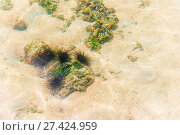 Купить «a bunch of dangerous sea urchins on the seabed», фото № 27424959, снято 10 ноября 2016 г. (c) Константин Лабунский / Фотобанк Лори