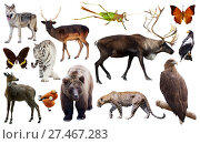 Купить «animal collection asia», фото № 27467283, снято 18 ноября 2018 г. (c) Яков Филимонов / Фотобанк Лори