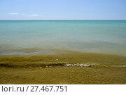 Купить «Coastal sea waves. Seawater with seaweed. Coastal algae. Sea beach», фото № 27467751, снято 19 июля 2015 г. (c) Леонид Еремейчук / Фотобанк Лори