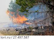 Купить «Fire in a forest», фото № 27497587, снято 25 июня 2019 г. (c) easy Fotostock / Фотобанк Лори