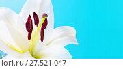 Купить «Flower background. White lily flower, Lilium Navona. Selective focus at the lily flower stamens, space for text», фото № 27521047, снято 3 сентября 2017 г. (c) Зезелина Марина / Фотобанк Лори